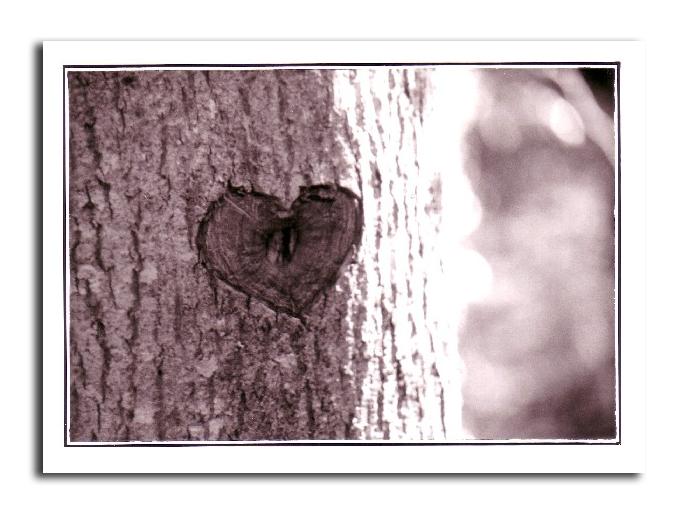 gravure arbre cœur